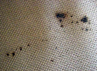 Spot & Stain Removal San Mateo